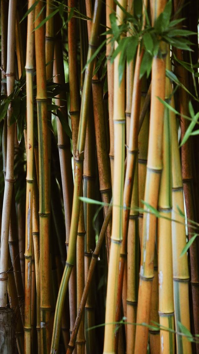 Naadloos ondergoed van bamboe
